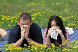 Allergia, szénanátha, Eger Egészség